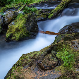 Unnamed Waterfall by Mats Nordgren - Landscapes Waterscapes ( water, stream, creek, moss, rock )