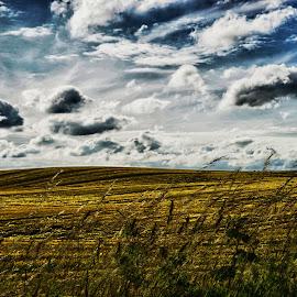 Golden field by Kim Moeller Kjaer - Landscapes Prairies, Meadows & Fields