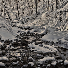 Winter Wonderland by Val Ewing - Landscapes Forests