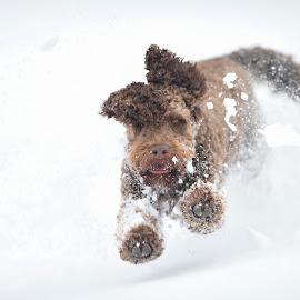 Winter time! by Ole Walter Sundlo - Animals - Dogs Running ( hund, fun, hund i landskap, hund i vinterlandskap, running )