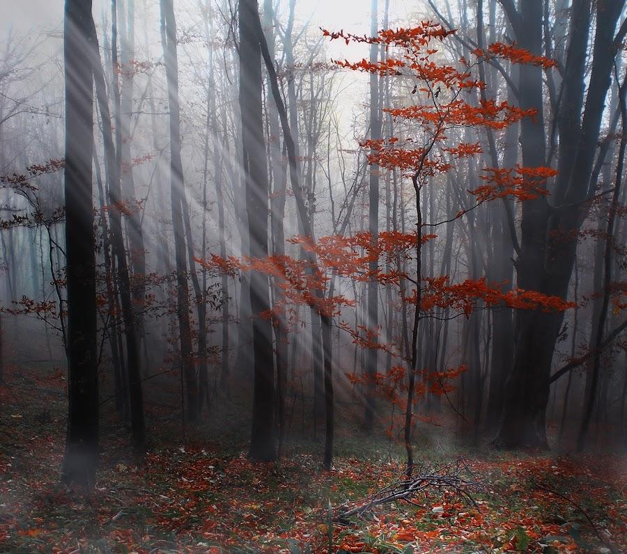 Scene by Alexandru Avramescu - Landscapes Forests