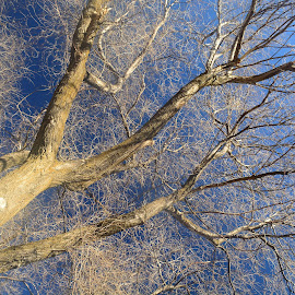 Tree top. by Denton Thaves - Nature Up Close Trees & Bushes ( tree )