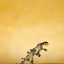 Yellow umbrella by Nick Vanderperre - Abstract Water Drops & Splashes ( studio, 2017, water, geel, macro, splash, nikon, 105 mm, nikon d7000,  )