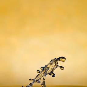 Yellow umbrella by Nick Vanderperre - Abstract Water Drops & Splashes ( studio, 2017, water, geel, macro, splash, nikon, 105 mm, nikon d7000 )