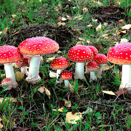 Mushrooms by Mārīte Ramša - Nature Up Close Mushrooms & Fungi (  )
