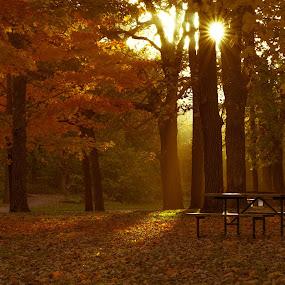 Golden by Bob White - Landscapes Sunsets & Sunrises ( colot, park, sunset, fall, leaves, photooftheday,  )