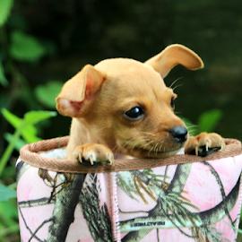 RealTree Pup by Jennifer Duffany - Animals - Dogs Puppies ( realtreepup realtree puppy dog intheboot )