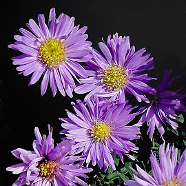 by Dee Haun - Flowers Flowers in the Wild ( purple, 160404x6084ce3, flowers in the wild, yellow center, flowers )