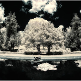 Ringwood Manor park infrared by Ronny Mariano - Black & White Landscapes ( ir, nature, ringwood manor, infrared, state park, outdoor, 2016, pond )