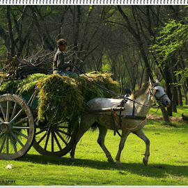 Life in Forest  by Mohsan Haidry - Animals Horses