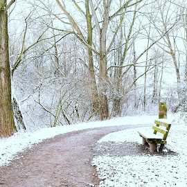 Snowy Path by Abhinav Ganorkar - City,  Street & Park  City Parks ( winter, bench, park, snow, lake )