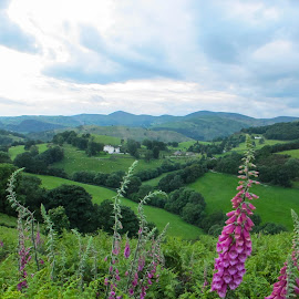 by Judy Smith - Landscapes Mountains & Hills ( clouds, wales, sunset, foxglove )