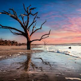 by Kelley Hurwitz Ahr - Landscapes Beaches ( charleston, tree, botany bay, pink and blue, sea, ocean, sunrise, beach, landscape, january 2016, morning, boneyard, south carolina )