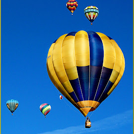 Gold & Blue by Shawn Thomas - Transportation Other ( flight, hot air balloon, balloon, float, new mexico,  )