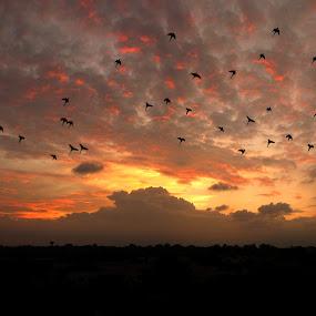 sunset by Saptarshi Mandal - Landscapes Sunsets & Sunrises ( bird, nature, sunset, cloud, landscape )