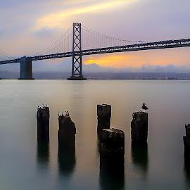 Bay Bridge Sunrise by Lee Molof - Buildings & Architecture Bridges & Suspended Structures