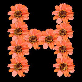 H by Paul Wante - Typography Single Letters ( orange, letter, typography, flowers, design )