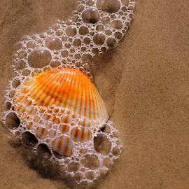 seashell in the surf by Pam Satterfield Manning - Artistic Objects Other Objects ( water, sand, seashore, pattern, movement, bubbles, seashell, sea, ocean, beach, stripes, surf, foamy,  )