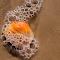 seashell in surf 3.jpg