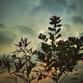 HDR CLICK DURING DAWN by Pritangshoo Paul - Nature Up Close Other plants ( clouds, dawn, hdr, nature, leaves, garden, flower )