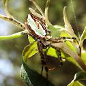 Enamel spider