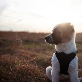 by Christina Conrad - Animals - Dogs Puppies (  )