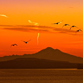 Early Birds by Campbell McCubbin - Landscapes Sunsets & Sunrises ( orange, dawn, silhouette, sunrise, geese, morning )