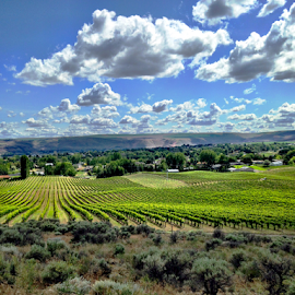 Clouds over vineyard by Kathy Dee - Instagram & Mobile iPhone ( wine, clouds, vineyard, yakima, green, state, agriculture, farmland, valley, growing, farm, washington, sky, tri-cities, nature, blue, outdoors, produce )