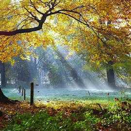 Autumn by Gert de Vos - Landscapes Forests