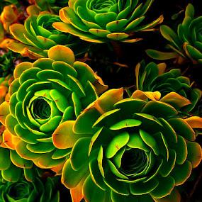 Artichoke Cactus by Khaled Ibrahim - Nature Up Close Other plants