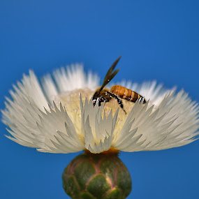 The Beauty  and an Insect. by Kamal Mallick - Flowers Single Flower