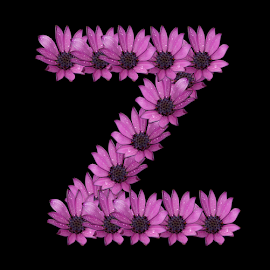 Alphabet - Z by Dipali S - Typography Single Letters ( optical, optics, illustration, motivation, daisy, type, decor, inspiration, nature, calligraphy, card, place, flower, template, element, text, creative, letter, font, art, label, calligraphic, sign, frame, poster, word, typography, letters, headline, graphic, ornate, decorative, dew, captioned, title, words, quote, inscription, rain, classic, note, banner, typographic, abstract, icon, purple, vintage, decoration, advertisement, photo, message, motivational, typo, background, artistic, drops, z, design )