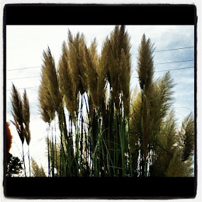 Plant by Brennan Adamus - Instagram & Mobile Other (  )
