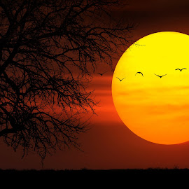 Sunset by Bess Hamiti - Digital Art Places ( nature, tree, sunset, kosovo, trees, night, landscape, big, birds, sun )
