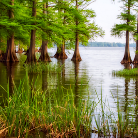 0373-LW-0606-05-15 by Fred Herring - Landscapes Waterscapes (  )