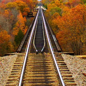 Fall Bridge by SumPics Photography - Transportation Trains ( railroad, fall, track, arkansas & missouri railroad, trees, trestle bridge, leaves, arkansas missouri )
