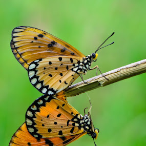 Butterfly in Love by Ade Yuda - Animals Insects & Spiders