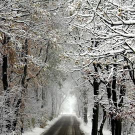 Winters Lane by Karl Lawrence - Landscapes Weather ( icy, cold, forces of nature, snow, white, trees, lane )
