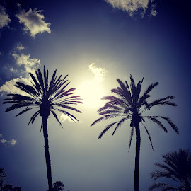 Palm Trees by Suzette Christianson - Nature Up Close Trees & Bushes (  )
