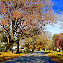 The last colors of Fall. by Peter DiMarco - City,  Street & Park  Street Scenes ( fall colors, street, trees, street scene, street scenes )