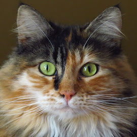 Roxie by Loreen Parkerson - Animals - Cats Portraits