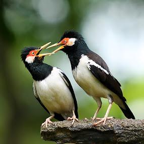 words war by Yan Abimanyu - Animals Birds