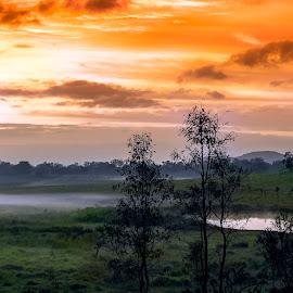 Misty rural sunrise by Rob Crutcher Snr - Landscapes Sunsets & Sunrises ( nature, colors, sunrise, landscape, misty )