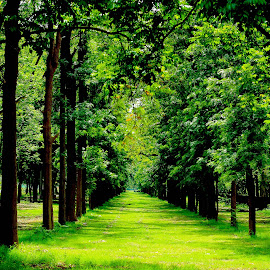 Way to Peace 2 by Nalin Sharma - Landscapes Travel ( green shade, peaceful, path between trees, aisle, green, green path, row, greenery, peace, path, chandigarh, trees in pattern, row of trees, green aisle )