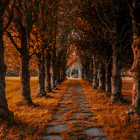 by Kennet Brandt - City,  Street & Park  City Parks