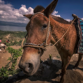Journey to Taal Valcano by Mae Yeoh Mei Yin - Animals Horses
