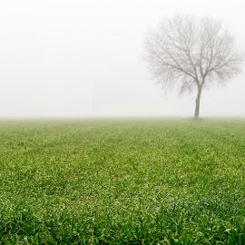 by Nuno Firmino - Landscapes Prairies, Meadows & Fields
