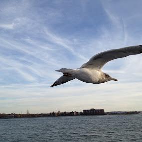 flying bird by Leelamohan Anantharaju - Uncategorized All Uncategorized ( flying, from_below, birds,  )