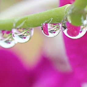 by Adianca Ridhani - Nature Up Close Water ( macro, macro_x, macroshot, macromagic, mybest_shot, macro_moment, macrogardener, mybest_macro, instamacro, instanaturelover, ig_captures_macro, instanusantaramacro, instanusantaranature, fs_macro_01, flowerstalking, dropsalicious, waterdrops, water_perfection, photopromotion, photoshare_everything, nature_obsession, bestshooter_macro )