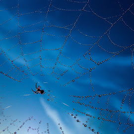 by Slavko Marcac - Nature Up Close Webs